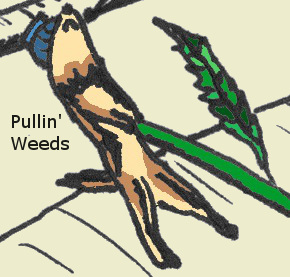 ferret pullin weeds beige